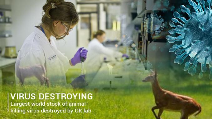 UK Lab destroyed the world Largest Stock of animal-killing Virus